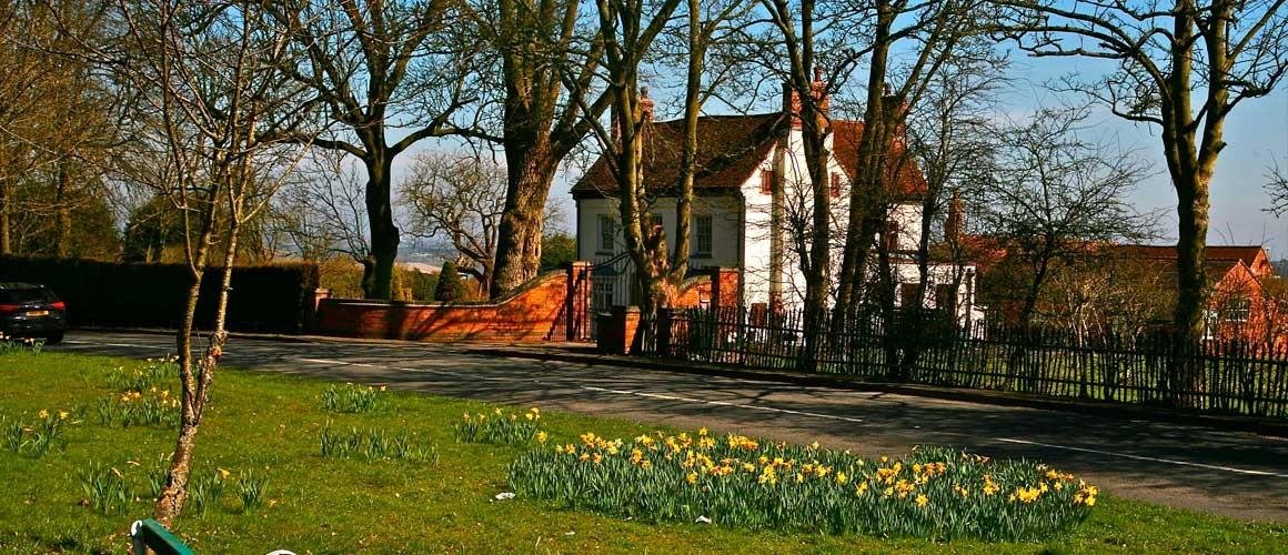 Hunnington Daffodils